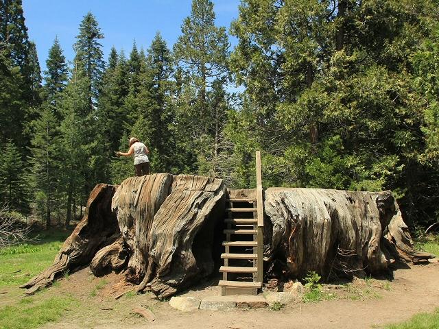 Top Etats-Unis - Sequoia National Park/Kinks Canyon - www.visite-usa.fr TT78