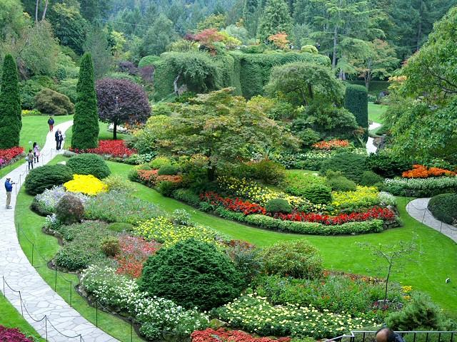 Canada victoria for Arbustes pour jardin anglais